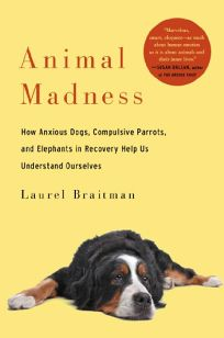 Animal Madness: How Anxious Dogs