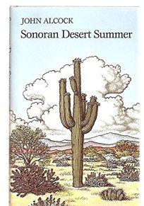 Sonoran Desert Summer