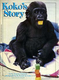 Kokos Story