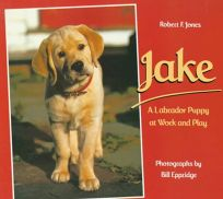 Jake: A Labrador Puppy at Work and Play