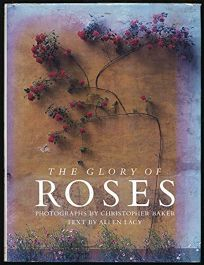 Glory of Roses
