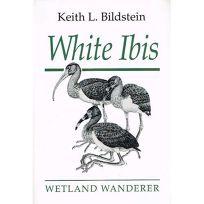 White Ibis: Wetland Wanderer