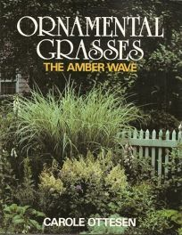 Ornamental Grasses: The Amber Wave