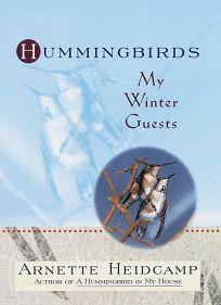 Hummingbirds: My Winter Guests