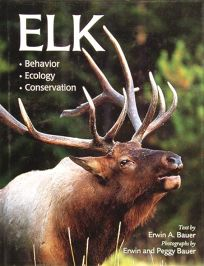 Elk: Behavior