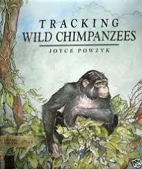 Tracking Wild Chimpanzees in Kibira National Park