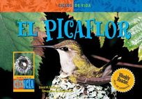 El Picaflor Hummingbird