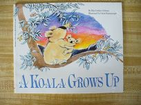 A Koala Grows Up