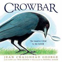 Crowbar: The Smartest Bird in the World